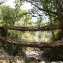 Chris on the Living Tree Root Bridge